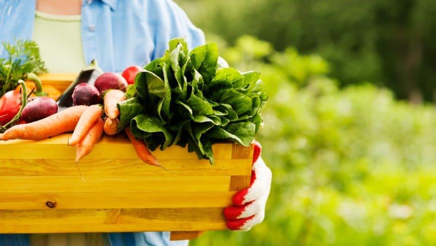 regime alimentaire legumes